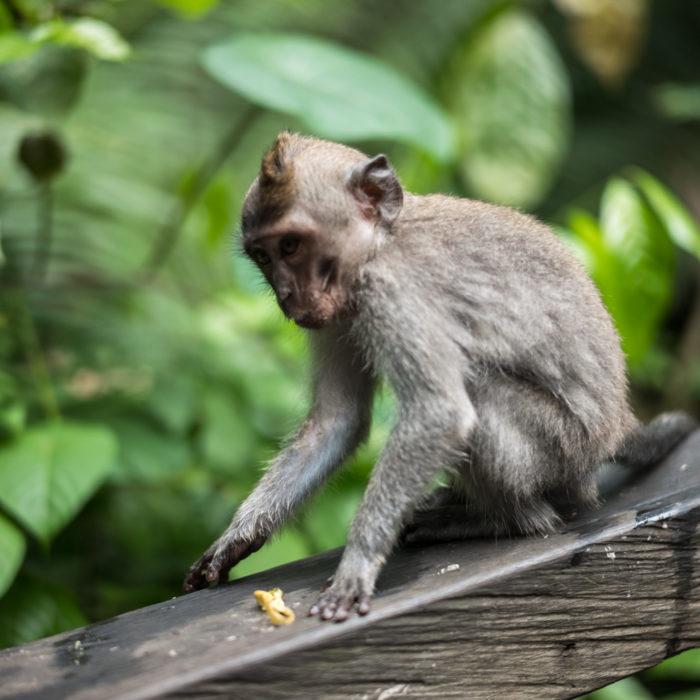 Ubud Monkey Forest, Bali